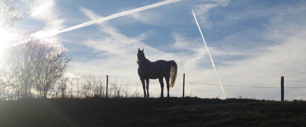 Routenvorschläge für Hunsrück zu Pferd